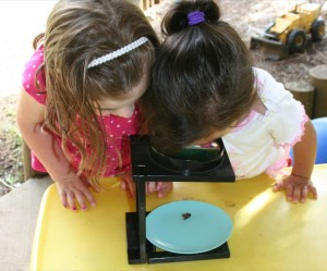 Children from A Quiet Forest Daycare and Preschool using a microscope.
